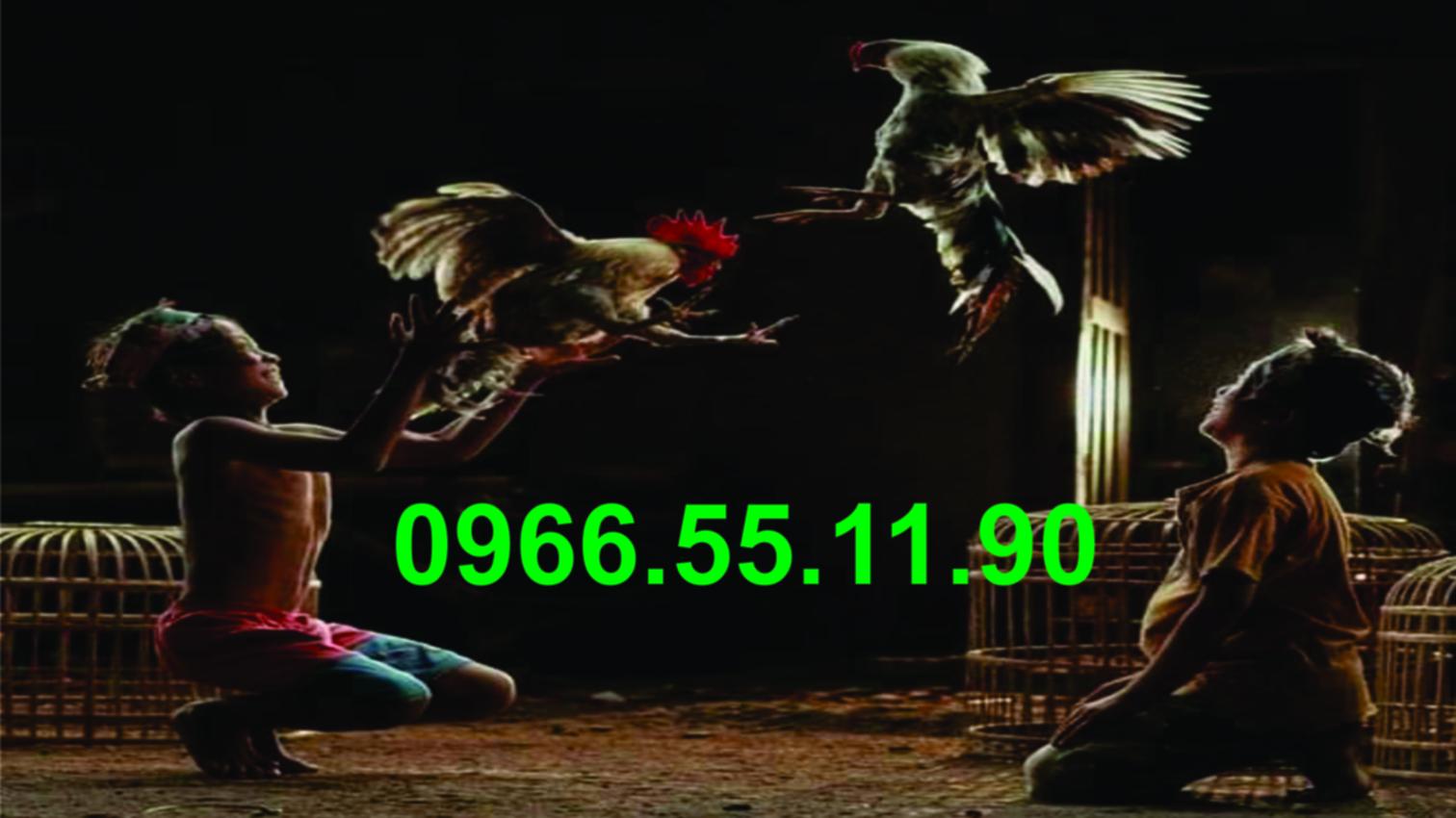 Xổ Cặp Gà Tre F1 ( Chì 2671 - 2673 )