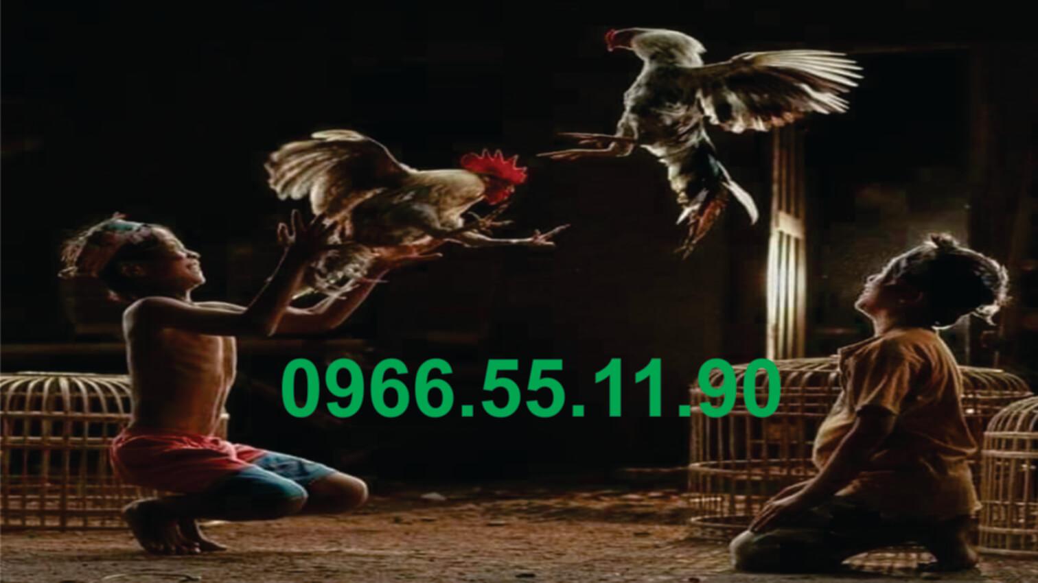 Cặp Gà Lông hàng VIP A/e Liên hệ 0966.55.11.90